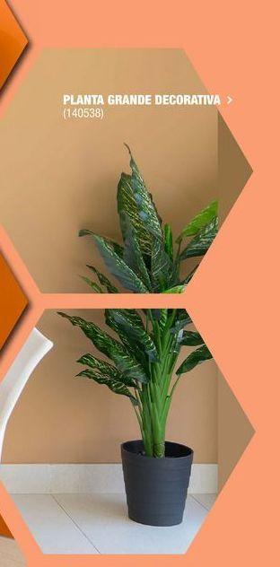 Oferta de Plantas decorativas por