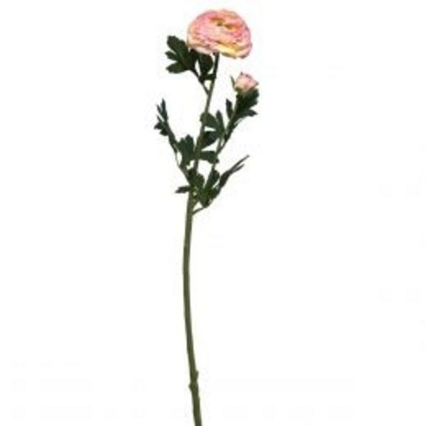 Oferta de Ranunculus Rosa 2 H 64Cm Lotus por $44