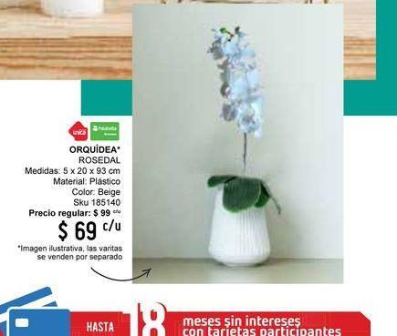 Oferta de Orquídeas por