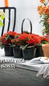 Oferta de Plantas por
