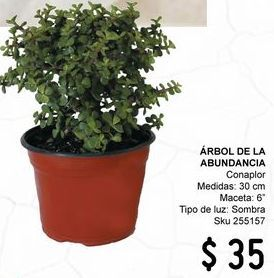 Oferta de Plantas por $35